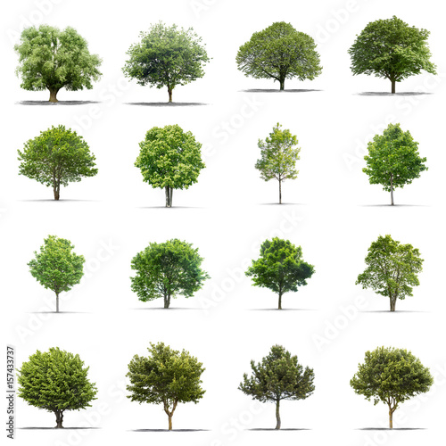 High definition collection Tree isolated on a white background плакат