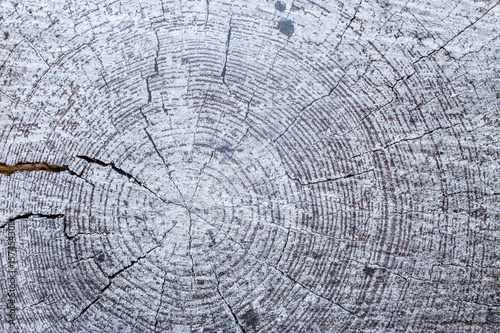 slice of wood, circular, core, painted white, close-up, texture - 157454301