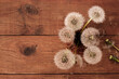 brown wooden background with white dandelions - 157457940