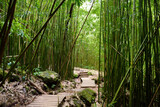 Path through dense bamboo forest, leading to famous Waimoku Falls. Popular Pipiwai trail in Haleakala National Park on Maui, Hawaii.