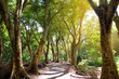 Beautiful path through tropical rain forest leading to Honolua Bay beach, Maui, Hawaii
