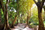 Beautiful path through tropical rain forest leading to Honolua Bay beach, Maui, Hawaii