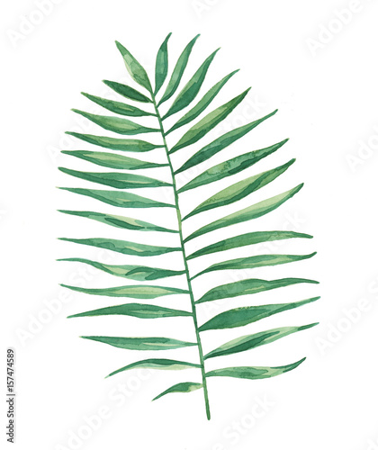 Watercolor Tropical Palm Frond Leaves Painting - 157474589