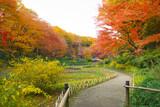 Autumn scene in the Park in Japan.