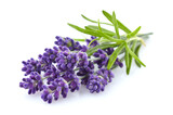 Lavender with leaves - 157506905