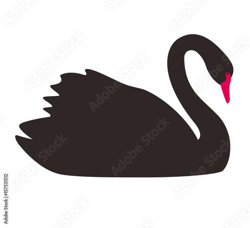 single elegance black swan flat icon, vector
