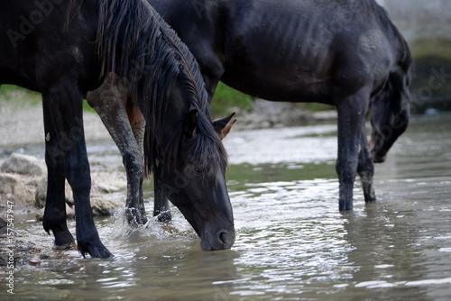 an der Tränke, mehrere Pferde saufen im Bach Plakát