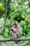 Young monkey sit at metal wall