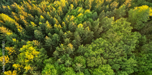 Aerial view of spruce forest