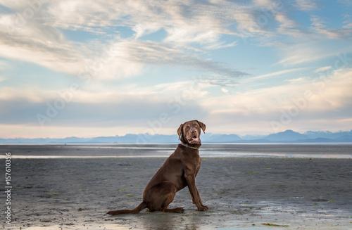 chien-a-la-plage