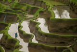 Rice terraces in Indonesia. Agriculture, rice, Indonesia.