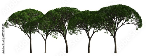 Trees in a row isolated on white 3d illustration - 157658380