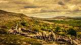 Rocky Landscape in the Burren, County Clare, Ireland