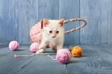 White kitten at blue wood