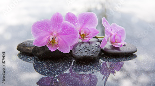 canvas print picture Three pink orchids and black stones close up.