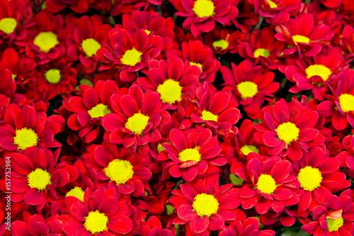 Staande foto Roses Beautiful set of flower buds