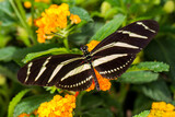 Papillon sur feuille