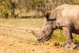 White Rhino, Hluhluwe, South Africa