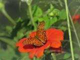 A sombra da borboleta na flor.