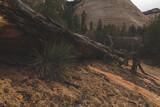 Zion National Park Landscapes