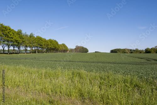 Poster Landscape in spring in Denmark