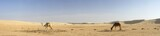 panorama with two camels in desert Sahara in Tunisia