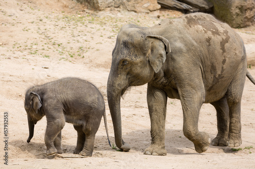 Papiers peints Hyène Elephant mother with baby elephant in zoo