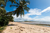 Exotic tropical island paradise with coconut trees - 157983587