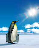 Penguin planning to travel