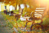 Benches in the autumn park - 158113742