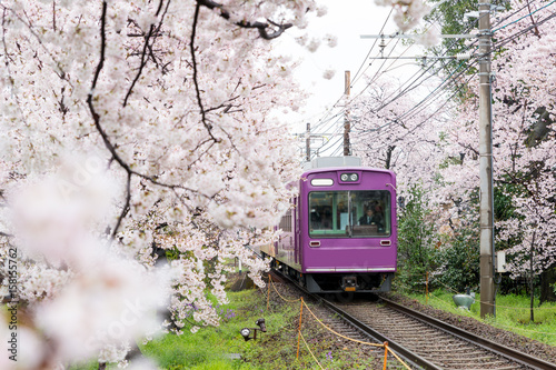 View of Kyoto local train traveling on rail tracks with flourishing cherry blossoms along the railway in Kyoto, Japan Poster