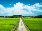 田舎の一本道