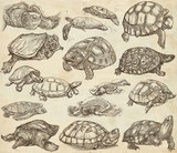 Turtles - collection of hand drawings, freehand sketches on old paper. - 158203549
