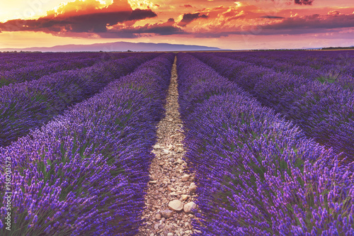 Papiers peints Morning Glory Beautiful sunset on lavender fields in Provence, France.Endless rows of lavender. The path in the lavender field.Lavender field at sunset.