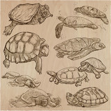 Turtles - An hand drawn vector collection. Tortoise. Set of hand drawings. Line art. - 158204372