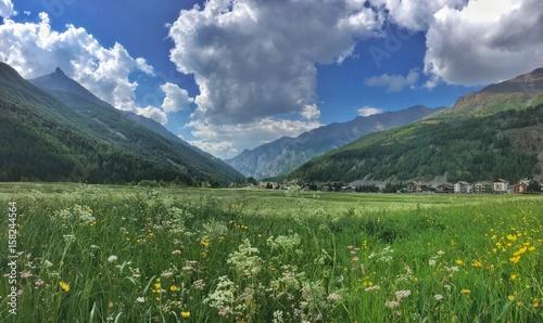 prato fiorito a Cogne in Valle d'Aosta