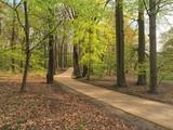 Gehweg im Park
