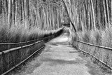 Bamboo Grove in Arashiyama - Kyoto, Japan