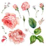 Set of vintage watercolor roses - 158284735