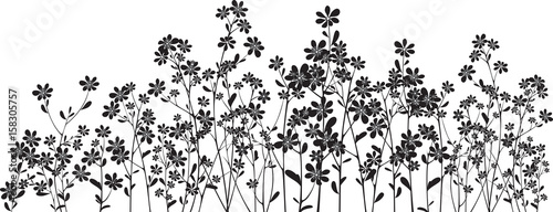 Silhouette wildflowers on white - 158305757