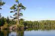 Small island with big pine on calm Minnesota lake
