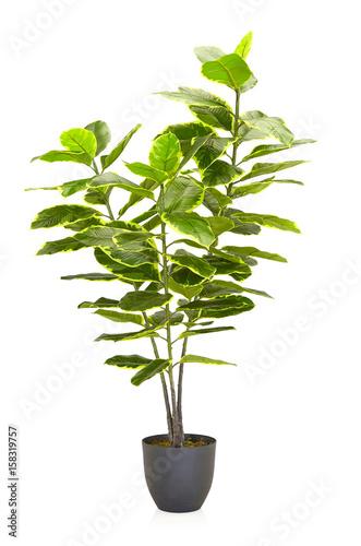 Staande foto Lelietje van dalen Green plant in vase decorated