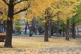 autumn in shinjuku public park, tokyo