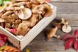 Autumn food. Mushrooms