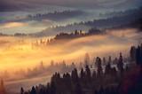 Fototapeta Misty mountain forest landscape in the morning, Poland
