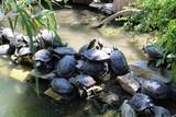 tortues qui bronzent