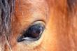 Nahaufnahme vom den Auge eines braunen Pferdes - 158414994