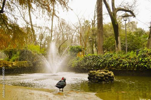 garden public park