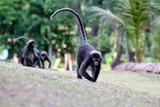 Monkey walk in the garden,Dusky langur