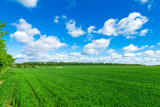 field of grass and perfect sky - 158428561